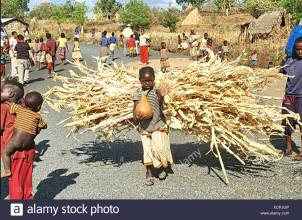 africa-ethiopia-konso-child-carrying-a-large-bundle-of-twigs-XCPJGP